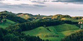 Din insider guide till vingårdarna i vinregionen Styria