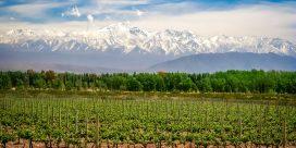 Den viktigaste vinregionen i Argentina – Guide till vingårdarna i Mendoza