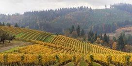 USAs goda viner – men inte Kalifornien!