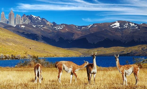 vinlandet-chile-naturreservat-Torres-del-Paine