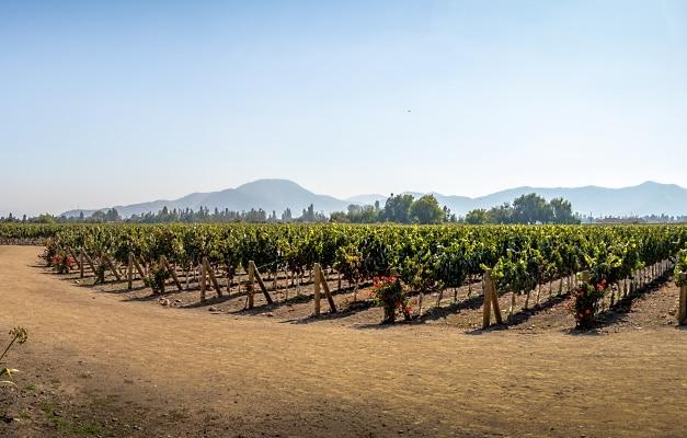 vinlandet-chile-vy-vingård