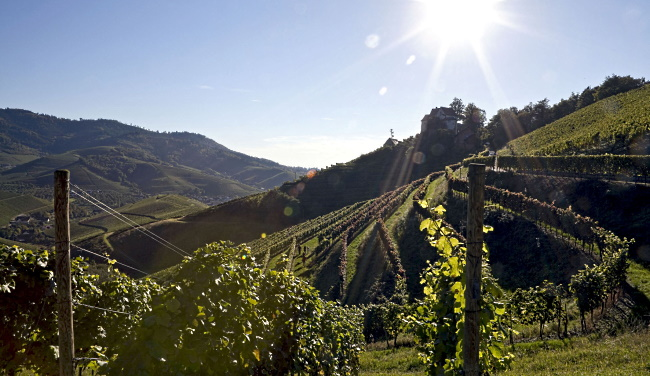 Vinregionen Baden - fler vingårdar