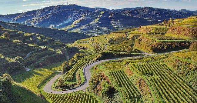 Vinregionen Baden - frontbild med höga vingårdar