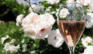 Rosa Prosecco ett glas rosa prosecco