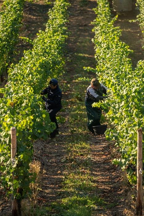 2020- en tillbakablick vingård