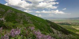 Vinregionen Thrakien