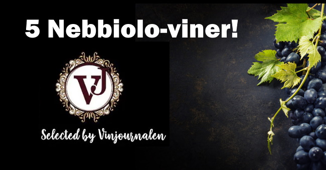 Nebbiolo omslagsbild druvor