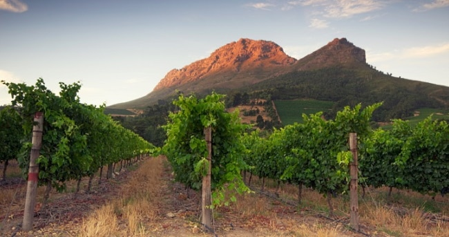 #SaveSAwine - vingård