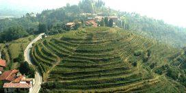 Region: Terre Lariane – vinerna kring Comosjön