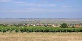 Vinregionen Burgenland