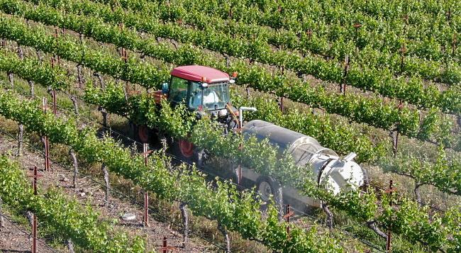 ekoviner - vingården besprutas