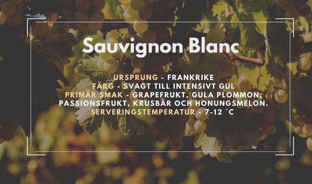 Fakta ruta om Sauvignon Blanc
