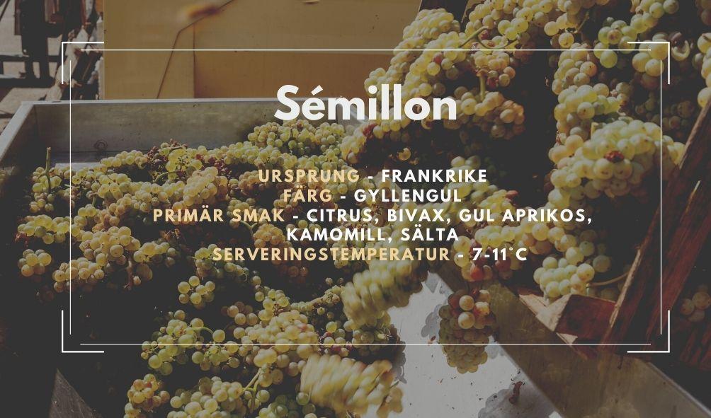 Fakta ruta om Sémillon