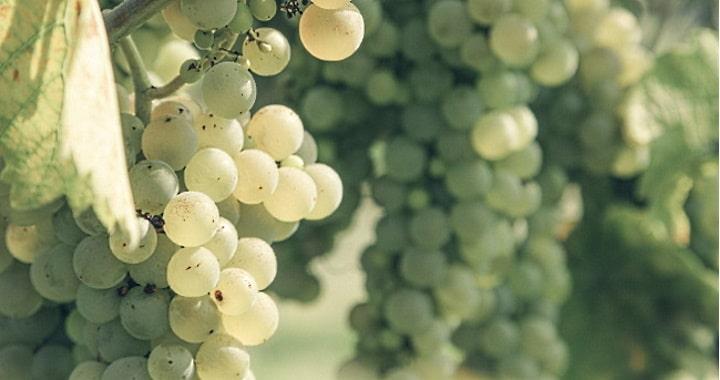 sparris och vin