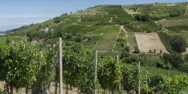 Israel har en urgammal vinhistoria …