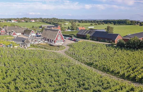 Arilds vackra vingård belägen på sydsidan av Kullaberg i Skåne med restaurang, boende och vingårdsbesök