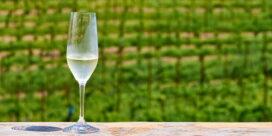Skånskt vin – Sveriges Napa Valley!