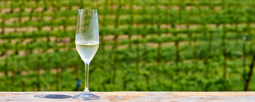 omslag sverige vin - ett glas på en vingård