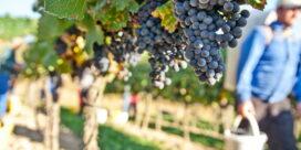 Biodynamiskt vin – vad är det egentligen?