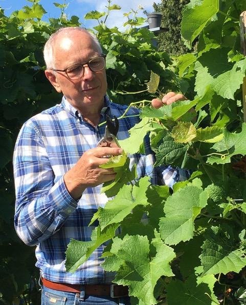 Sveneric Svensson i vingården