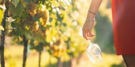 Hur går det för våra svenska viner?