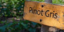 Pinot Gris eller Pinot Grigio – vad väljer du?