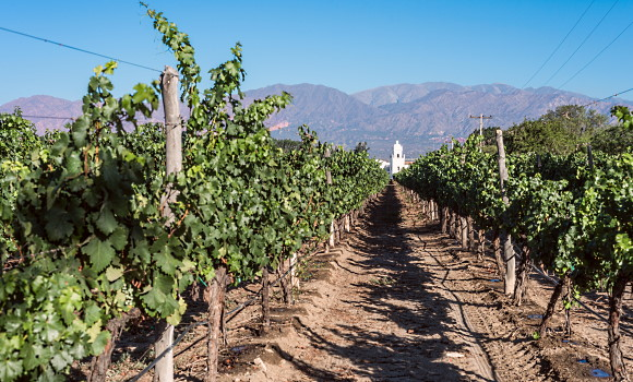 argentinas viner - en vingård