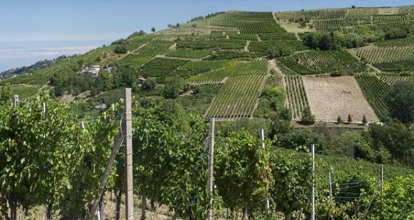 israel vingård